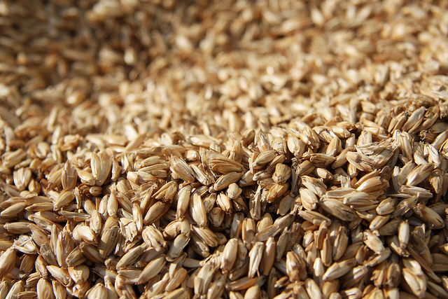 The Homemade Wellness Guide to Whole Grains (11)