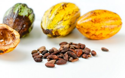 How eating cacao beans may help save the rainforests