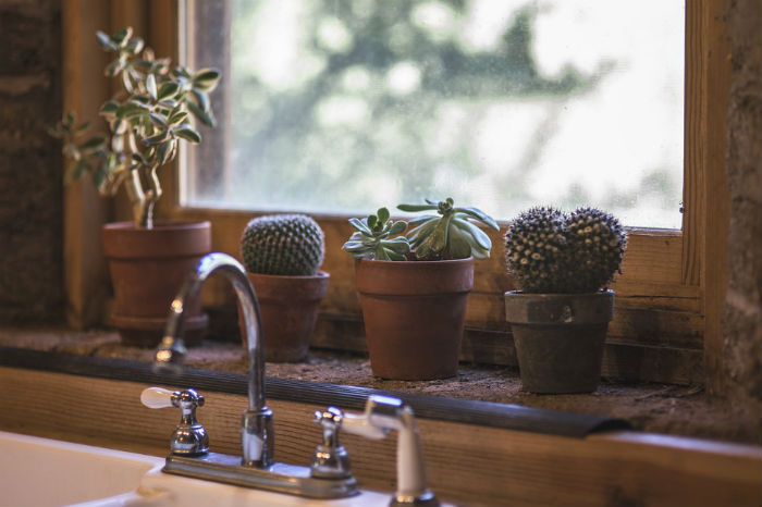 Kitchen sink and succulents in windowsill